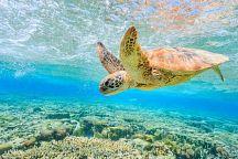 Пхукет приглашает на марафон ради спасения черепах